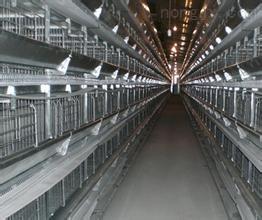 河北安平厂家供应肉鸡笼子