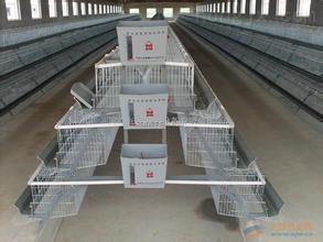 厂家直销塑料鸡笼|运输鸡笼