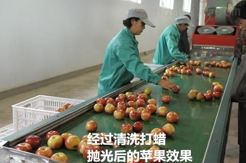三代-水果清洗打蜡包装机-新式苹果清洗打蜡机