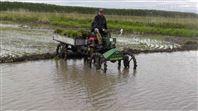 自走式水稻运苗机