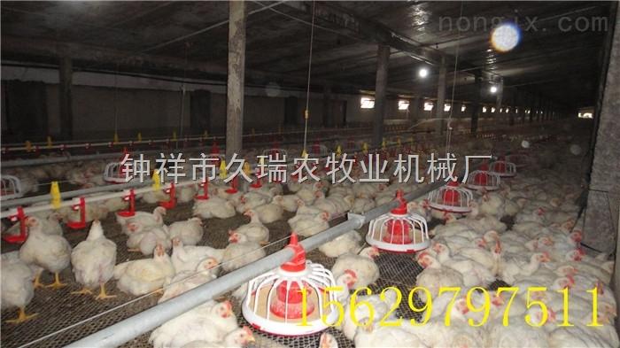肉鸡自动上料机料线