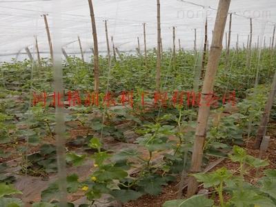 襄樊保康县温室蔬菜大棚滴灌带质优价廉【*】