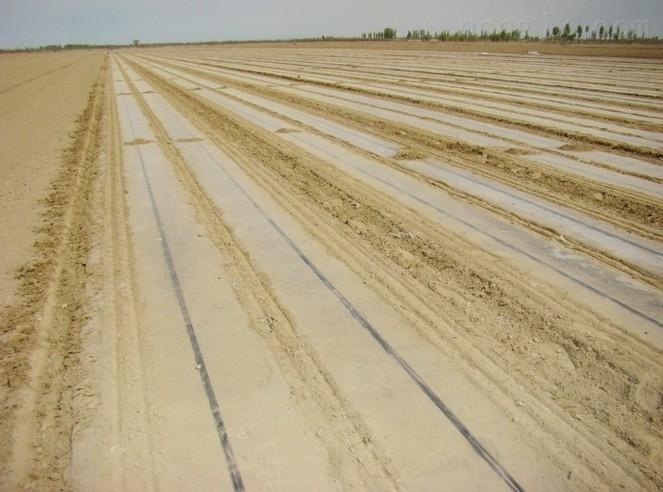 玉米膜下滴灌