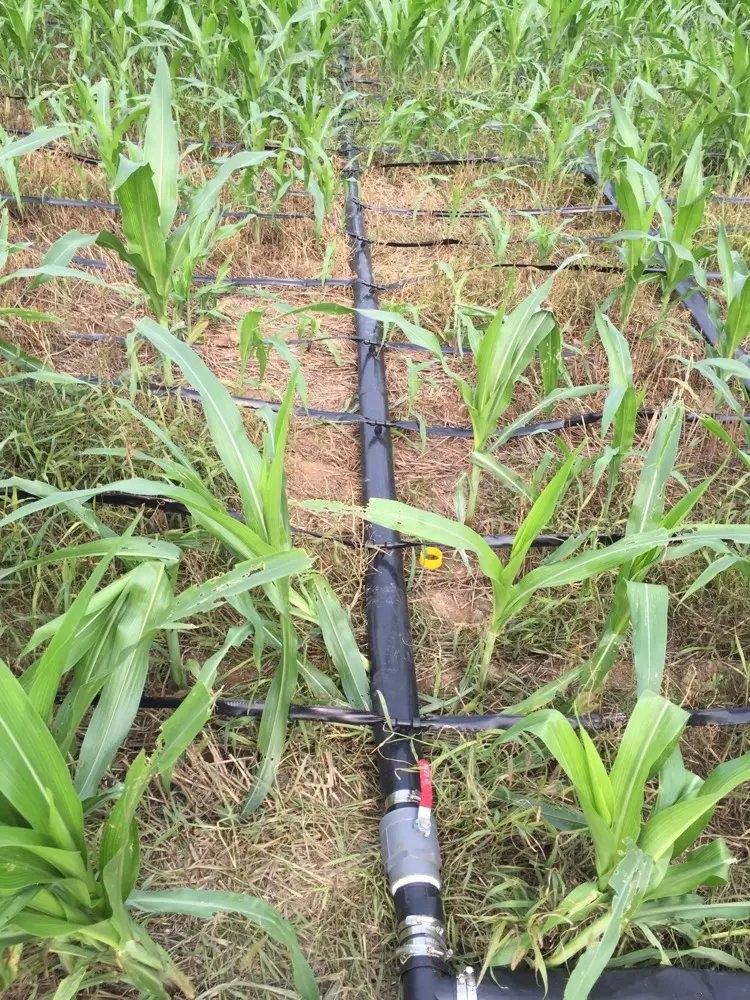 玉米膜下滴灌成本