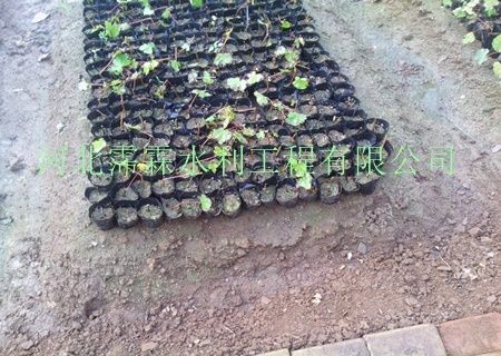 蔬菜微喷头售价/山西大同微喷头生产厂家