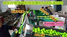 福建青枣选果机,适合家庭作坊或工厂使用