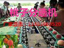 XGJ-T油桃分选机-油桃分大小的设备