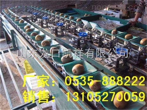 XGJ-MHT-分选猕猴桃重量选果机-三代凯祥猕猴桃选果机
