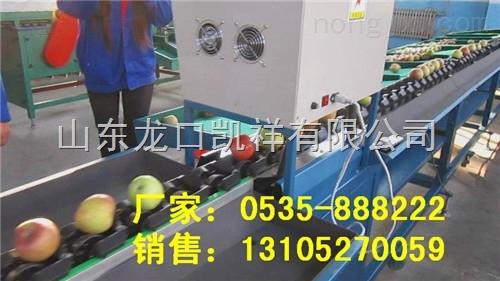 遼寧蘋果智能選果機 高效快速分選蘋果機器 雞冠蘋果分選機