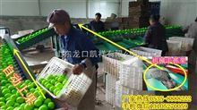 XGJ-QZ中国台湾大青枣高效选果机