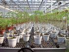 齐全邢台市滴箭可用于盆栽花卉浇水