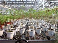 邢台市滴箭可用于盆栽花卉浇水