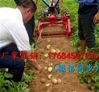 高产量低消耗土豆收获机 手扶式小型土豆收获机厂家