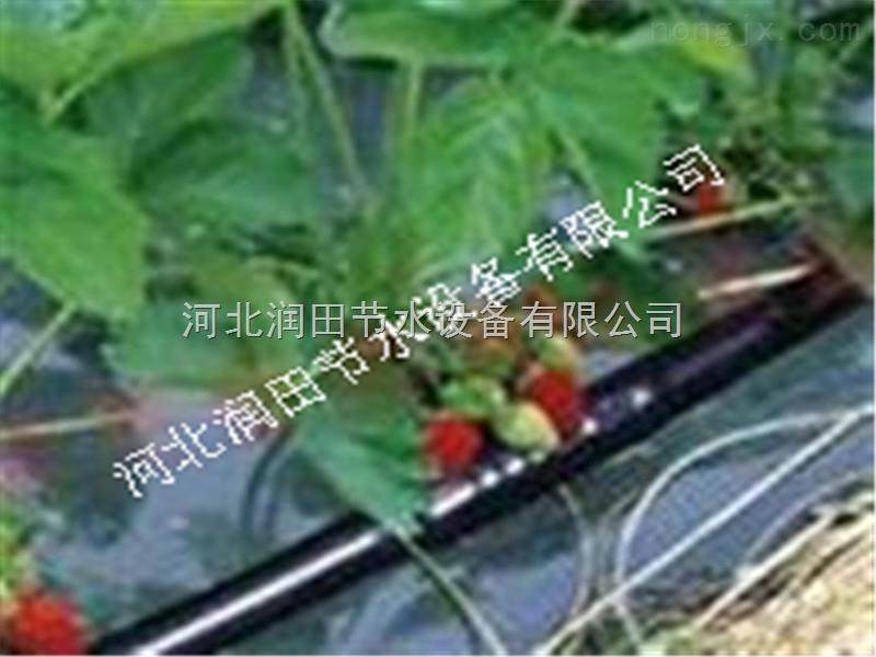 草莓滴灌管价格