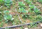 多种草莓滴灌管 安徽滴灌PE管价格