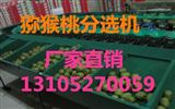 XGJ-SZZ猕猴桃分选机详细介绍