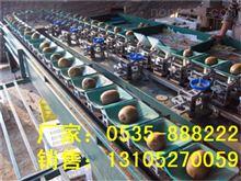 XGJ-SZZ猕猴桃分选机作用-供应大猕猴桃选果设备