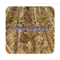 滴灌带价格如何使用zui专业的生产安装厂家