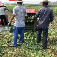 青毛豆采摘机 多功能摘荚机