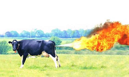 全球变暖与畜牧业有何关联?