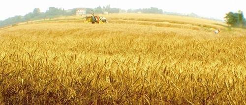荆门市出台《耕地地力保护规范意见》