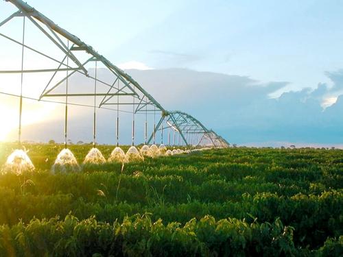 广西财政五项措施确保农业保险工作有序进行