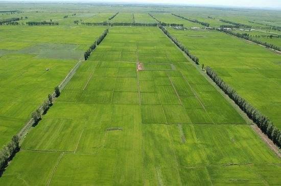 绿色农业大势掀起新风热潮