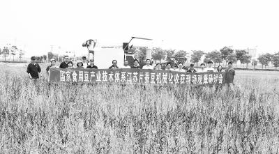 各路专家齐聚南通农场破解蚕豆机收难题