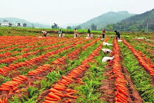 农机老招牌助力新型观光农业