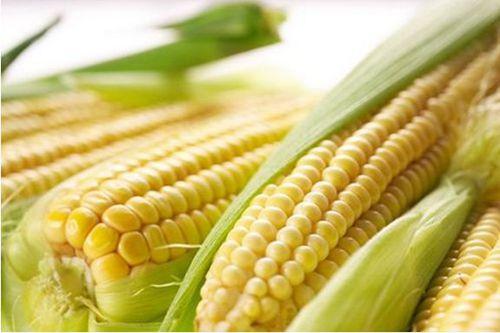 鲜食玉米收获机或是国内玉米收获机行业未来的蓝海市场