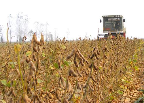 大庆:调整完善大豆补贴政策   预计9月底前能拿到补贴