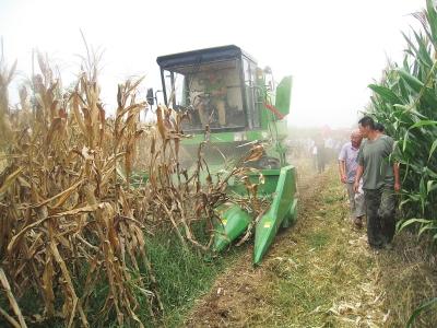 莱州玉米生产全程机械化有了质的提升