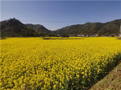 2020中国数字农业创新发展高峰论坛等你来!