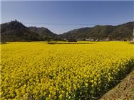 2020中國數字農業創新發展高峰論壇等你來!