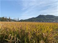 廣西2020年第一批省級農機推廣鑒定獲證產品檢測結果公布
