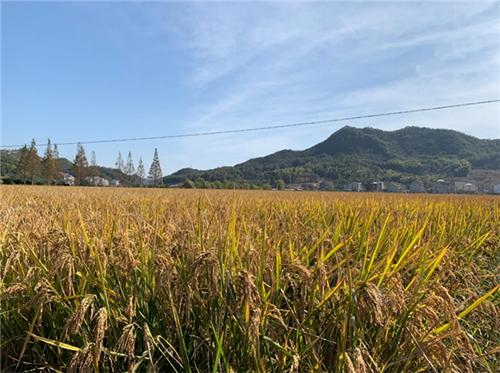 江苏省2020年推进全省现代种业发展工作要点