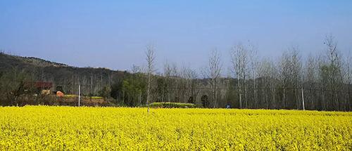 2020年安徽省推进现代种业发展工作要点