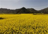 2020年,哪类农机将会迎来大发展?