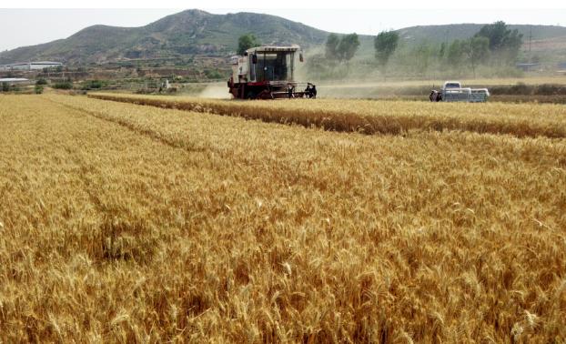 河北省:今年粮食播种面积9600万亩、综合机械化率达83%以上