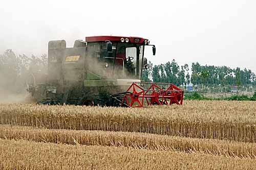洛阳中收8小麦收割机