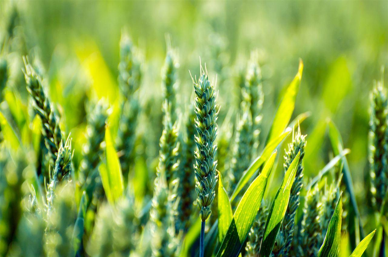 世界农业 图片素材