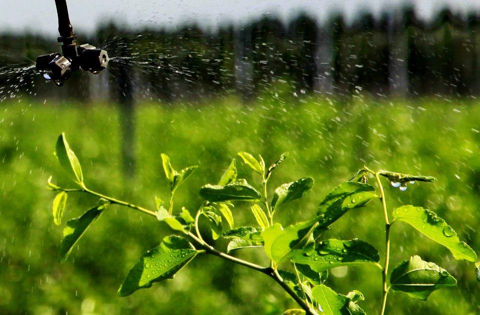 市新发展张汪镇高效节水灌溉农田1.98万亩