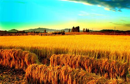 就是农业结构调整有序推进