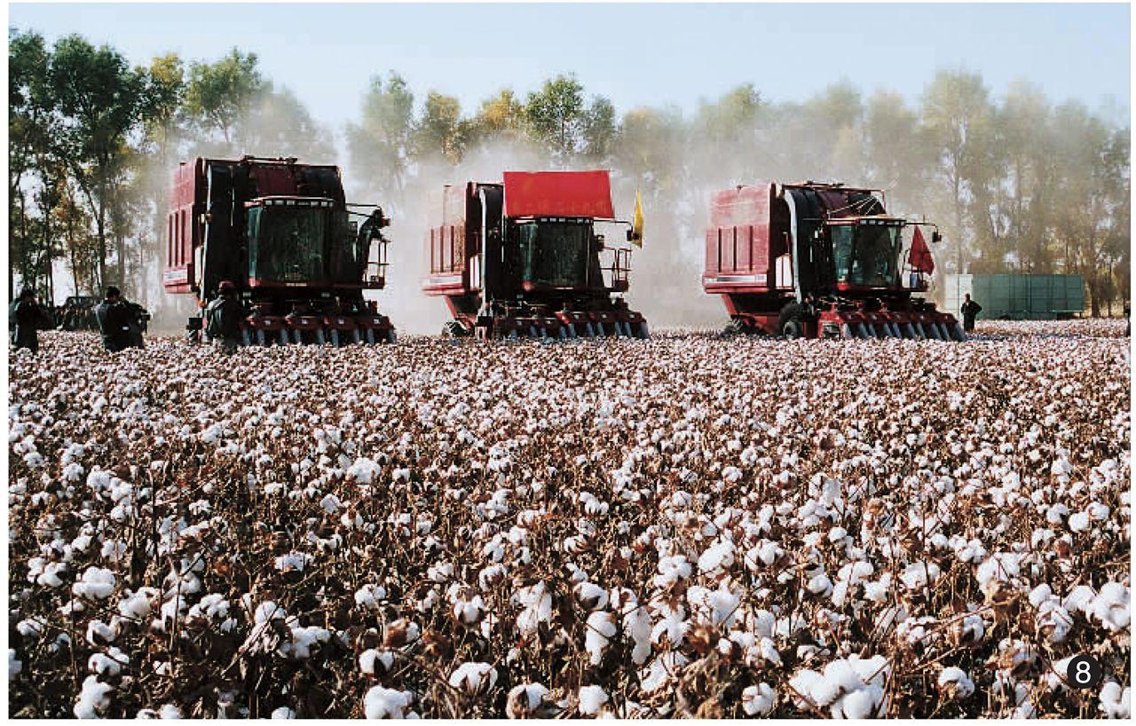 2017年棉花生产机具补贴有望加大_棉花,机具,补贴_中国农机网